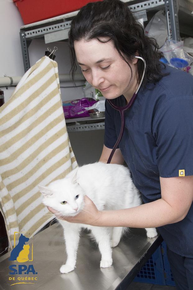 animal shelter promotion