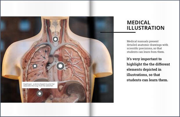 lungs illustration